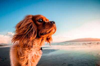 Biodescodificación de Mascotas