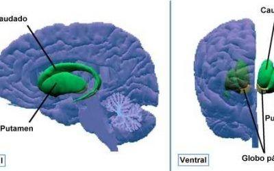 El Accidente Cerebro Vascular desde la Biodescodificación