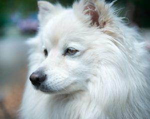 El Caso de Kiko- La Lógica de un Perro en Casa
